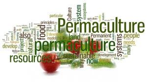 alba_permaculture_wordcloud