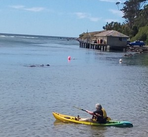 karitane-kayaking